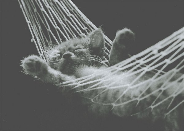 Kitten in Hammock (1 card/1 envelope) Graphique De France Birthday Card - FRONT: No Text  INSIDE: Relax and enjoy your day.  Happy Birthday