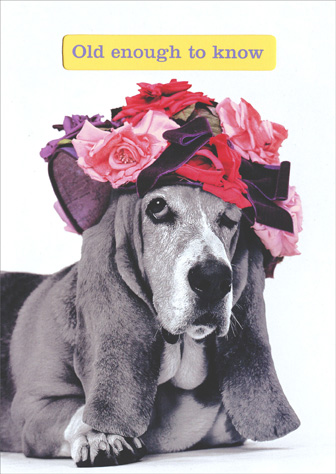 Bassett in Hat (1 card/1 envelope) Graphique De France Birthday Card - FRONT: Old enough to know  INSIDE: Old enough to know better..young enough not to give a damn! Happy Birthday