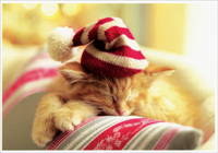 Sleeping Kitten (1 card/1 envelope) - Christmas Card  INSIDE: Have a purr-r-fectly wonderful holiday season!