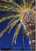 Lights on Palm Tree (1 card/1 envelope) - Christmas Card  INSIDE: Wishing you a Christmas that's joyful, bright, and wonderful!
