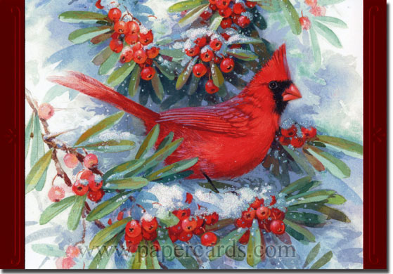 Cardinal in Branches (1 card/1 envelope) Image Arts Christmas Card  INSIDE: Thinking of you and wishing you a wonderful holiday season.