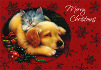 Sleeping Kitten and Puppy (1 card/1 envelope) - Christmas Card - FRONT: Merry Christmas  INSIDE: May all your Christmas dreams come true!