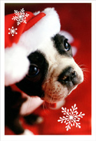 Boxer in Santa Hat (16 cards/16 envelopes) - Boxed Christmas Cards  INSIDE: Hope Christmas brings you all you're wishing for!