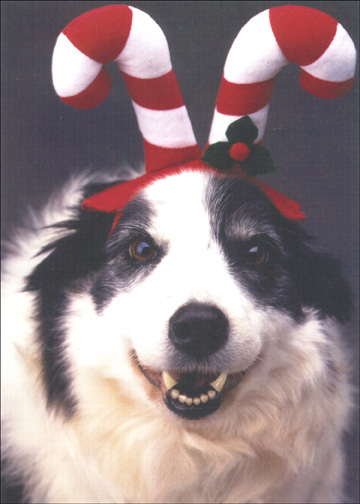 Dog with Candy Cane Antlers (1 card/1 envelope) - Christmas Card - FRONT: No Text  INSIDE: Wishing you a very Merry Christmas.