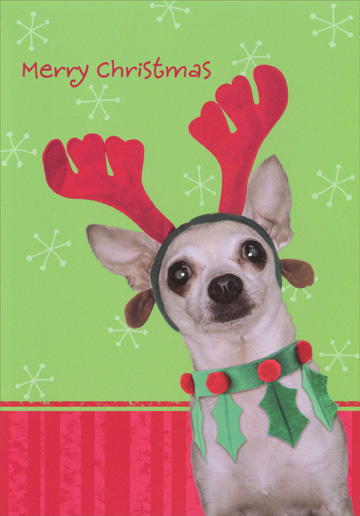 Chihuahua with Style (1 card/1 envelope) - Christmas Card - FRONT: Merry Christmas  INSIDE: Celebrate Christmas in style!