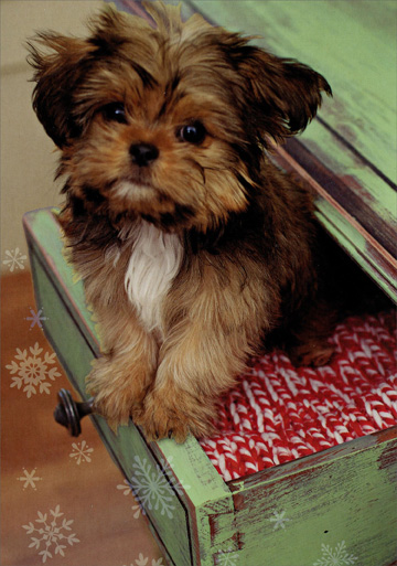 Puppy in Drawer (1 card/1 envelope) Image Arts Dog Christmas Card  INSIDE: Hope Christmas brings a smile to your face!