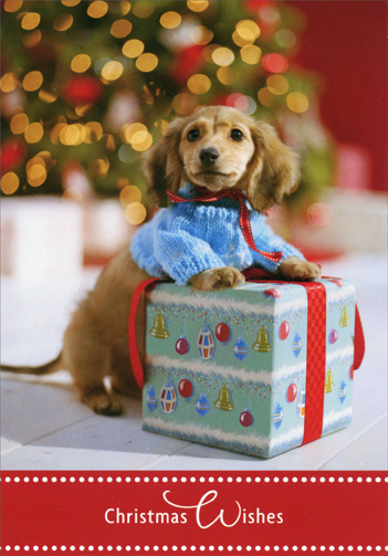 Cocker Spaniel with Gift (16 cards/16 envelopes) Image Arts Dog Boxed Christmas Cards - FRONT: Christmas Wishes  INSIDE: Wishing you happiness to share this Christmas season.