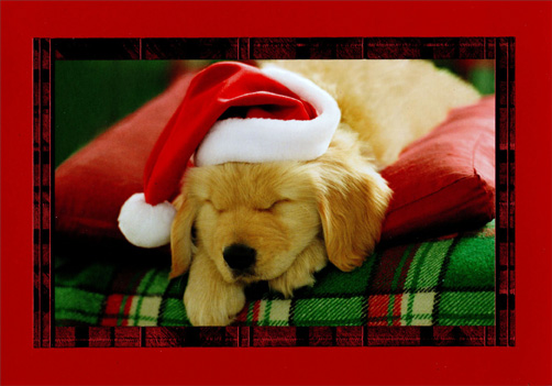 Sleeping Labrador Puppy (16 cards/16 envelopes) - Boxed Christmas Cards  INSIDE: Have yourself a merry little Christmas!