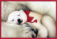 Sleeping Polar Bear Cub (16 cards/16 envelopes) Image Arts Boxed Christmas Cards