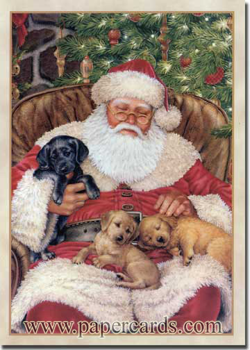 Nap Time (1 card/1 envelope) Dog Christmas Card  INSIDE: May your Christmas be filled with special moments and happy memories.