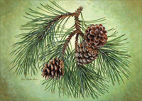 Pine Cone Branch (1 card/1 envelope) LPG Christmas Card