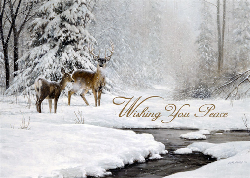 Wildlife Christmas Cards.Details About Dear And Stream In Winter Box Of 18 Lpg Nature Christmas Cards