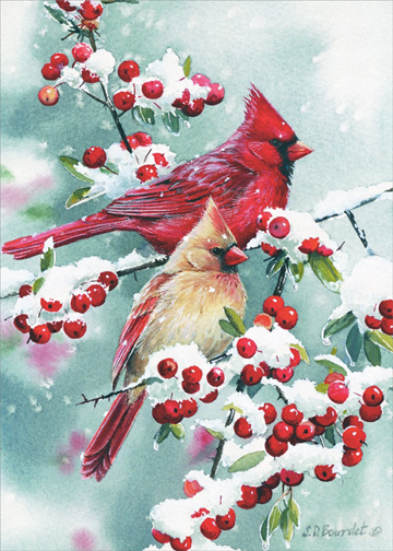 Boxed Christmas Cards Sale