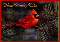 Cardinal and Gold Foil Pine Needles Christmas Card
