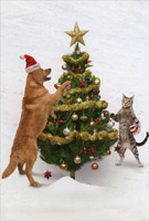 Animal Antics Dog and Cat Decorating Tree Box of 12 Christmas Cards