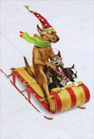 Animal Antics Dogs and Cat Sledding Christmas Card