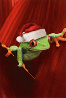 Frog with Santa Hat Box of 12 Christmas Cards