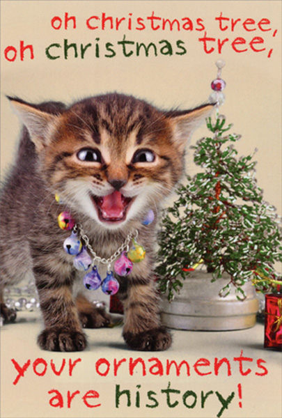 Boxed Cat Christmas Cards.Details About Your Ornaments Are History Kitten Box Of 12 Humorous Funny Cat Christmas Cards