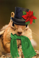 Chipmunk with Top Hat and Green Scarf Box of 12 Christmas Cards