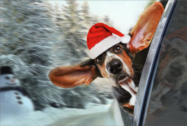 Bassett Hound Looking Out Car Window Cute Dog Christmas Card By