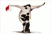 Bovine Nirvana Cow Headstand Yoga Box of 12 Christmas Cards