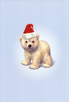 Zoo Babies Polar Bear John Butler Box of 12 Christmas Cards