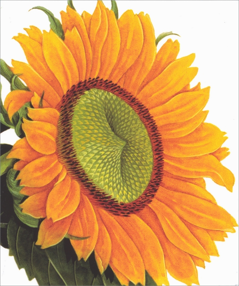 Notes /& Queries Bright Yellow Sunflower Blank Note Card