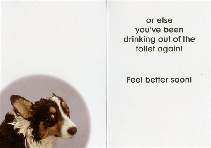 Wet Nose (1 card/1 envelope) Oatmeal Studios Funny Get Well Card - FRONT: They say a wet nose is a sign you're getting better�  INSIDE: or else you've been drinking out of the toilet again! Feel better soon!