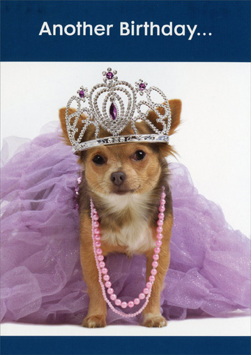 Dog with Tiara (1 card/1 envelope) Oatmeal Studios Funny Birthday Card - FRONT: Another Birthday…  INSIDE: Looks good on you!  Happy Birthday!