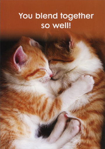 Cuddling Orange Kittens (1 card/1 envelope) Oatmeal Studios Funny Anniversary Card - FRONT: You blend together so well!  INSIDE: Happy Anniversary!