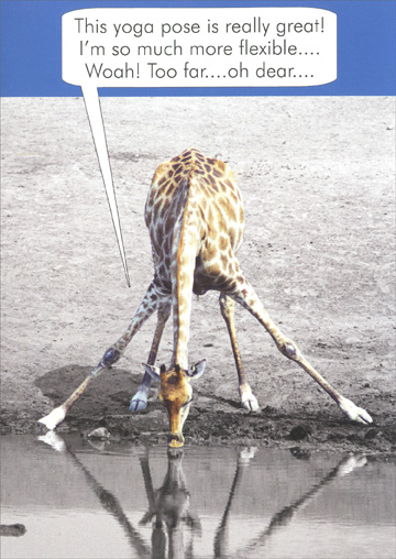 Giraffe Drinking from Pond (1 card/1 envelope) Oatmeal Studios Funny Birthday Card - FRONT: This yoga pose is really great!  I'm so much more flexible.. Woah!  Too far.. oh dear..  INSIDE: You, old?  Now that's a stretch!  Happy Birthday!