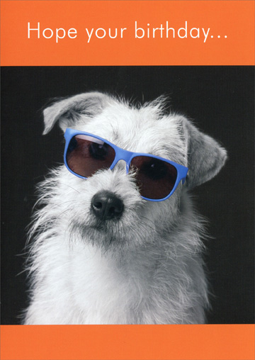 White Dog with Sunglasses (1 card/1 envelope) Oatmeal Studios Funny Birthday Card - FRONT: Hope your birthday..  INSIDE: ..is as cool as you are!  Happy Birthday!