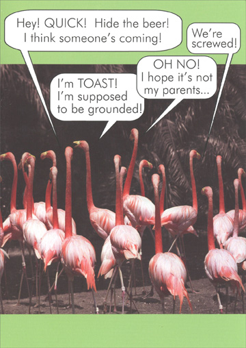 Group of Flamingos (1 card/1 envelope) Oatmeal Studios Funny Birthday Card - FRONT: Hey! QUICK! Hide the beer! I think someone's coming!  We're screwed!  OH NO! I hope it's not my parents..  I'm TOAST! I'm supposed to be grounded!  INSIDE: Party like you're a kid again!  Happy Birthday!