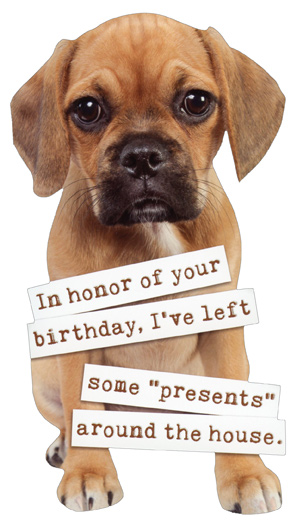 Puggle Puppy Die Cut Funny Dog Birthday Card By Paper House