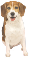 Beagle Die Cut Gift Card Holder Note Card