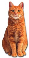 Red Tabby Cat Die Cut Blank Note Card