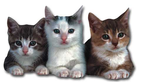 Three Kittens (1 card/1 envelope) Paper House Productions Die Cut Cat Blank Card