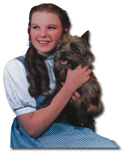 Wizard of Oz - Dorothy And Toto (1 card/1 envelope) Paper House Productions Die Cut Blank Card