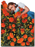 Wizard of Oz - Dorothy Poppy Field Die Cut Blank Note Card