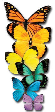 Row Of Butterflies (1 card/1 envelope) Paper House Productions Die Cut Blank Card