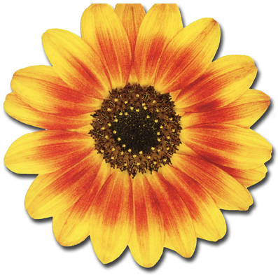 Ornamental Sunflower (1 card/1 envelope) Paper House Productions Die Cut Birthday Card  INSIDE: Happy Birthday to You