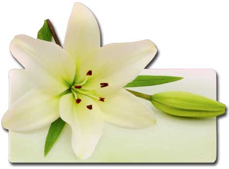 White Lily (1 card/1 envelope) Paper House Productions Die Cut Sympathy Card  INSIDE: wishing you comfort & strength during this difficult time
