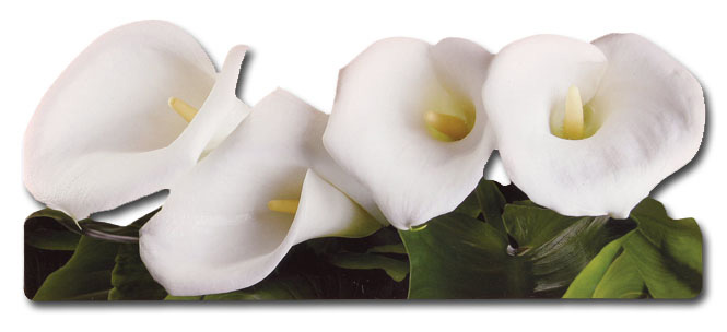 Calla Lillies (1 card/1 envelope) Paper House Productions Die Cut Sympathy Card  INSIDE: thinking of you and wishing you comfort during this time of sorrow