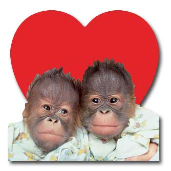 Orangutan Love (1 card/1 envelope) Paper House Productions Die Cut Valentine's Day Card  INSIDE: I found the perfect Valentine�  you!