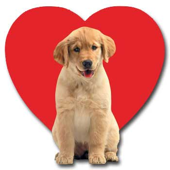 Golden Puppy Love (1 card/1 envelope) - Valentine's Day Card  INSIDE: It's more than puppy love!  Happy Valentine's Day