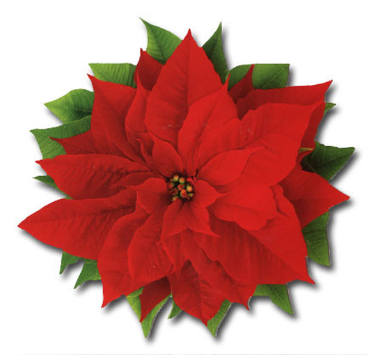 Red Poinsettia (1 card/1 envelope) Paper House Productions Die Cut Christmas Card  INSIDE: Merry Christmas
