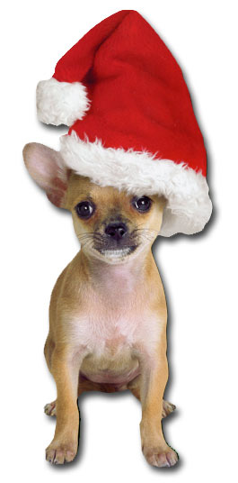 Holiday Chihuahua (1 card/1 envelope) Paper House Productions Die Cut Dog Christmas Card  INSIDE: be merry