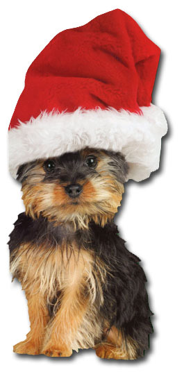 Holiday Silky Terrier (1 card/1 envelope) Paper House Productions Die Cut Dog Christmas Card  INSIDE: celebrate the season