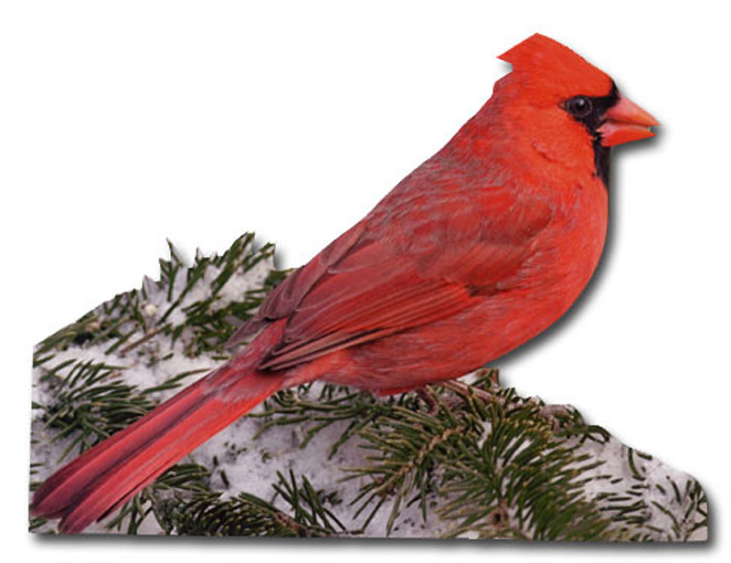 Cardinal (1 card/1 envelope) Paper House Productions Die Cut Bird Christmas Card  INSIDE: Season's Greetings