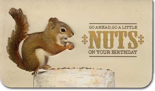 Go A Little Nuts (1 card/1 envelope) Paper House Productions Die Cut 3D Birthday Card - FRONT: Go ahead, go a little nuts on your birthday  INSIDE: You deserve it. Happy Birthday